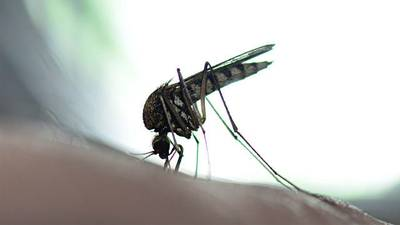 West Nile virus reported in Camden County