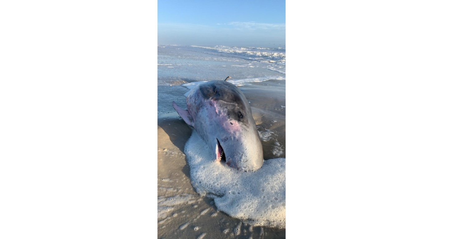 Dead whale washes ashore in Ponte Vedra Beach, witnesses say