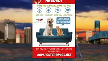 Help give local dogs, cats at animal shelters a chance by adopting them