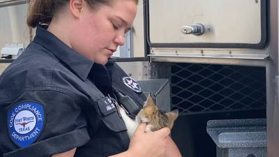 WATCH: Officers rescue kitten from Texas freeway in heartwarming video