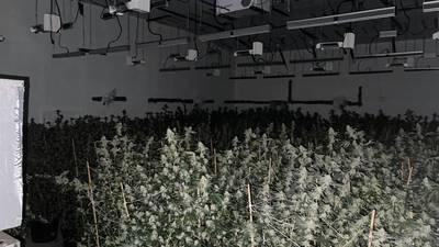 275 marijuana plants discovered in Ocala warehouse